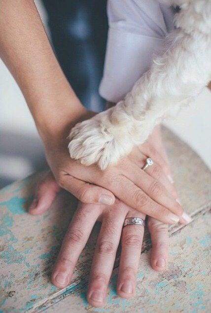 fotos de anillos de compromiso